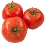 Rode tomaat. Stock Foto's