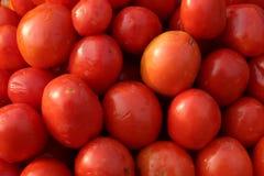 rode tomaat of nachtschadelycopersicum Stock Afbeelding