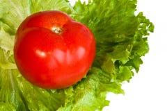 Rode tomaat op groene saladebladeren Stock Foto's