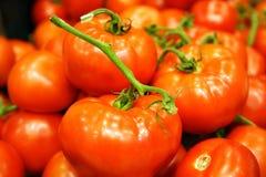 Rode tomaten Royalty-vrije Stock Afbeelding