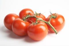 Rode tomaten Royalty-vrije Stock Afbeeldingen