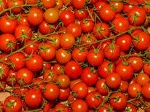 Rode tomaten Stock Afbeelding
