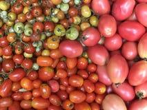 Rode tomaten Stock Foto