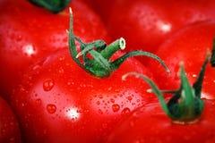 Rode tomaten Achtergrond van rode ruwe tomaten Stock Afbeeldingen