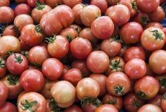 Rode tomaten De organische tomaten van de dorpsmarkt Verse tomaten Kwalitatieve achtergrond van tomaten Royalty-vrije Stock Foto's
