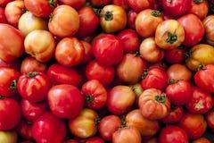 Rode tomaten De organische tomaten van de dorpsmarkt Verse tomaten Kwalitatieve achtergrond van tomaten Royalty-vrije Stock Foto