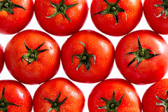Rode Tomaten met Waterdalingen op Witte Achtergrond Royalty-vrije Stock Fotografie