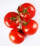 Rode tomaten op een groen takje op witte achtergrond royalty-vrije stock fotografie