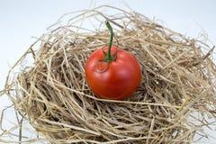 Rode tomaten op een stro Royalty-vrije Stock Foto's