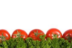 Rode tomaten op groene parseley Stock Afbeeldingen