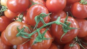 Rode Tomaten Plantaardige Achtergrond royalty-vrije stock foto's