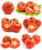 Rode tomaten plantaardige vruchten geplaatst geïsoleerd Royalty-vrije Stock Afbeelding