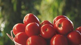 Rode Tomaten in Roze Mand royalty-vrije stock foto's