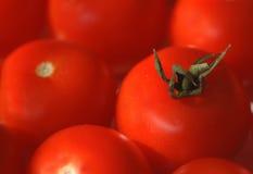 Rode tomatenachtergrond Royalty-vrije Stock Afbeeldingen