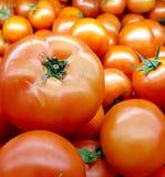 Rode tomatenachtergrond royalty-vrije stock fotografie