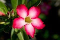 Rode tropische bloem royalty-vrije stock afbeeldingen