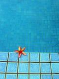 Rode tropische Bloem, blauwe pool Stock Fotografie