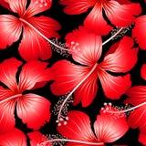 Rode tropische hibiscusbloemen met zwart naadloos klopje als achtergrond Royalty-vrije Stock Afbeelding