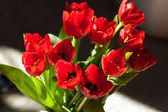 Rode Tulip Flower Bouquet stock afbeeldingen