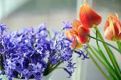 Rode tulp, en violette hyacint royalty-vrije stock foto