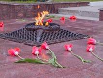 Rode tulpen dichtbij de eeuwige vlam in geheugen van slachtoffers in de grote Patriottische oorlog stock foto's