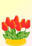 Rode tulpen in een gele kom Stock Foto's