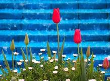 Rode Tulpen en Madeliefjes royalty-vrije stock foto