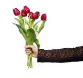 Rode tulpen in handen die op wit worden geïsoleerdd royalty-vrije stock fotografie