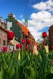 Rode tulpen in het centrum van de oude stad van Riga royalty-vrije stock fotografie