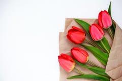 rode tulpen op een witte achtergrond Stock Fotografie