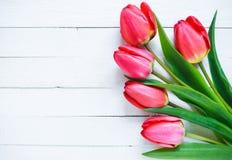 rode tulpen op een witte achtergrond Stock Afbeeldingen