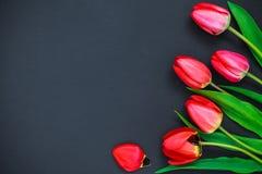 Rode tulpen op een zwarte achtergrond Stock Afbeeldingen