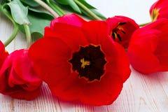 Rode Tulpen op houten achtergrond Stock Foto's