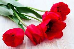 Rode Tulpen op houten achtergrond Stock Fotografie