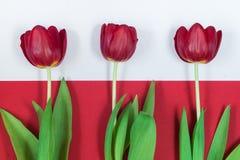 Rode tulpen op witte en rode achtergrond Stock Afbeeldingen