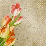 Rode tulpen tegen retro stip. EPS 10 Stock Afbeeldingen