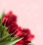Rode tulpenachtergrond Stock Afbeeldingen