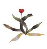 Rode tulpenvector Royalty-vrije Stock Foto's
