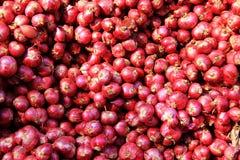 Rode uien Royalty-vrije Stock Afbeelding