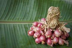 Rode Uieningrediënten thaifood Stock Fotografie