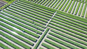 Rode uilandbouwer in landbouwgrond royalty-vrije stock afbeelding