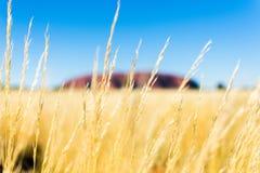 Rode Uluru in gouden aard stock afbeeldingen