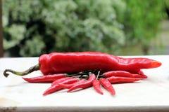 Rode verse Spaanse peperingrediënten Royalty-vrije Stock Fotografie