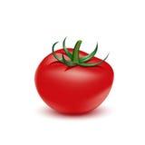 Rode verse tomaat op witte achtergrond Stock Afbeelding