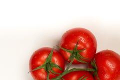 Rode verse tomaten op witte achtergrond Royalty-vrije Stock Foto's