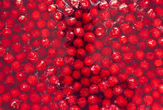 Rode verse voorbereide kersenjam, enkel Royalty-vrije Stock Foto