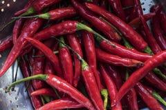 Rode Vietnamese Spaanse pepers stock afbeeldingen