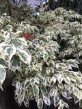 rode vlinder op bladeren stock afbeeldingen