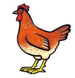 Rode volwassen kip Royalty-vrije Stock Afbeelding