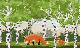 Rode vos in een berkbosje Wilde dieren van het bos royalty-vrije illustratie